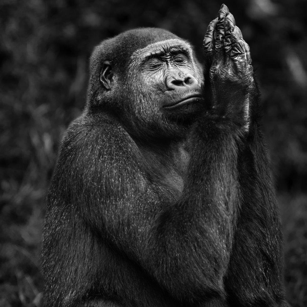 Primates, Isabel Muñoz (2)